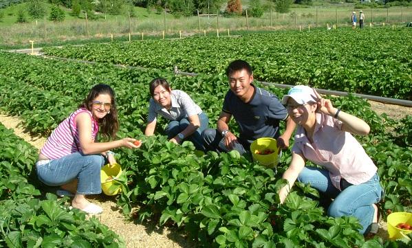 8. fruit picking
